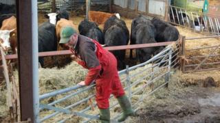 Richard Smith Burton Green beef and arable farmer