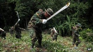 Bolivian troops cut illegal coca plants, 16 Jan 2012