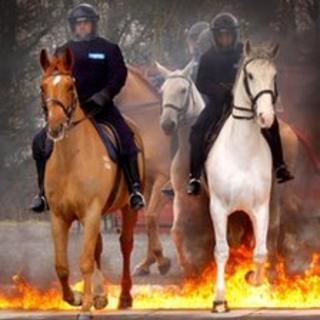 Pern the horse. Photo: Northumbria Police
