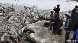 People watch Dalmatian pelicans as they gather in the water area of the Caspian Sea port in Makhachkala