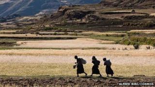 Ethiopia, Agula regionof Tigray. Farming women walk along a bank to reach their allotment. The average size of the allotments