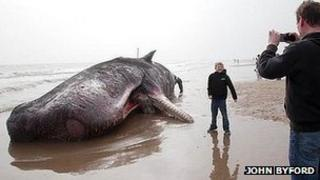 Whale on Skegness beach