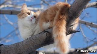 A cat in a tree