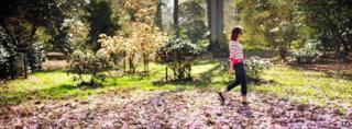 Spring scene at Westonbirt Arboretum