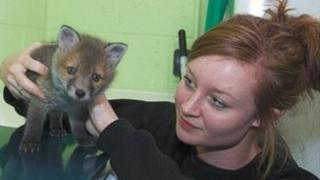 Alex Morris with Poppy the fox cub