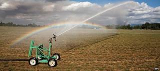 Spray irrigation in field