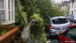 Tree damage in Cardiff street