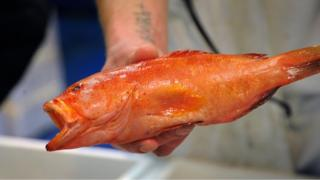 A fish at Billingsgate Market