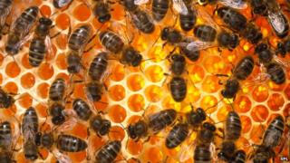 Bees fall out with members of their own family