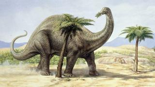 Illustration of Apatosaurus