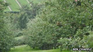 Orchard in Guernsey