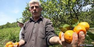 Abkhaz farmer