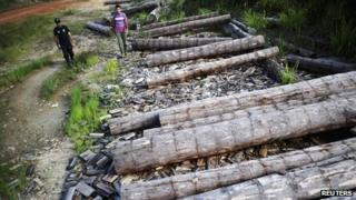 An agent from Brazil's land reform agency INCRA looks at a logs extracted illegally from the Amazon rainforest, in Anapu 2 June 2012.