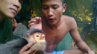 Soldiers torturing a monkey