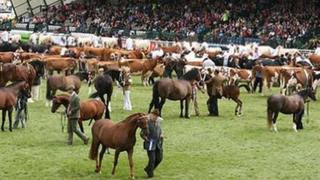 The Royal Welsh Show