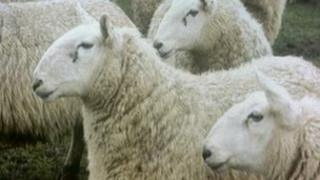The operation has been looking at the movement of sheep across the Irish border