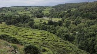 Chatsworth Estate moorland