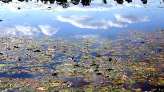 a pond with lillies and reflection of clouds