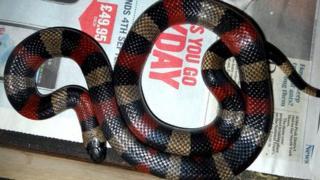 Snake in drawer