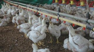 Phetogo chicken farm in Pretoria