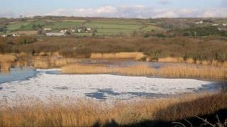 Marazion Marsh
