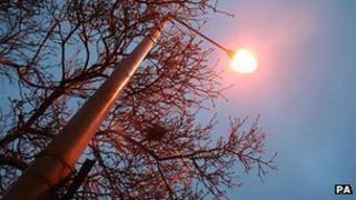 Tree next to street lamp