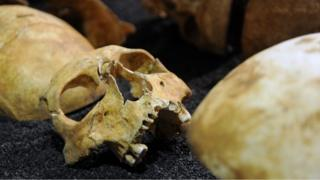 Human skeletons on display at the Museum of London