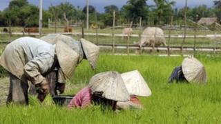 Workers in a field in Laos
