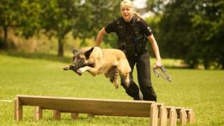 Gwent Police dog training