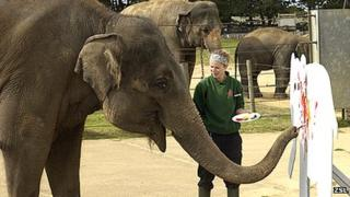 Karishma the elephant painting