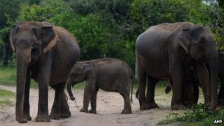 Elephants. File picture