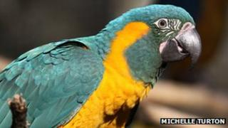 Blue-throated Macaw - Pic: Michelle Turton