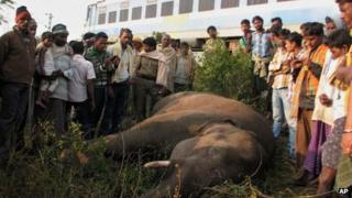 One of the elephants killed by a train in the Rambha forest area in India's Orissa state on 30 December 2012