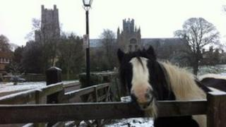Horse in the snow in Ely