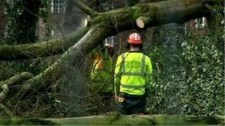 Tree felling in Alexandra Park, Whalley Range