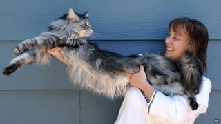Stewie, the world's longest domestic cat, with owner Robin Hendrickson.