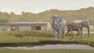 Concept drawing for proposed elephant sanctuary