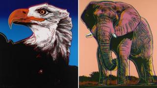 Bald eagle and African elephant