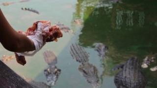 Feeding time at the world's biggest crocodile farm near Bangkok