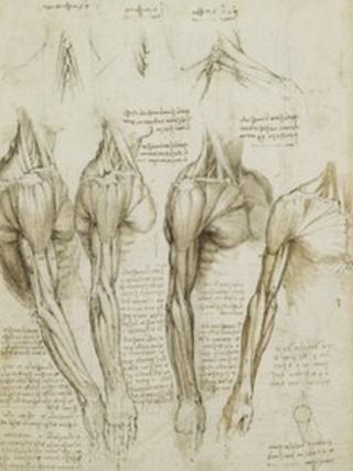 Leonardo's da Vinci's anatomical work