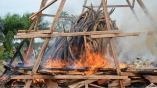 The burning of ivory stockpiles and seizures is the preferred solution for many countries at Cites