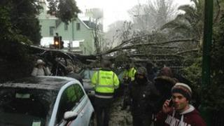 A car crushed by a tree in Guernsey