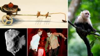 Flea circus, monkey, Ant and Dec, asteroid