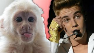 Justin Bieber and his pet monkey Mally.