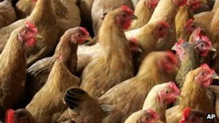 Chickens in Shanghai market