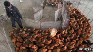 Poultry market in Nanjing