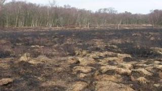 Fire damage at Heysham Moss