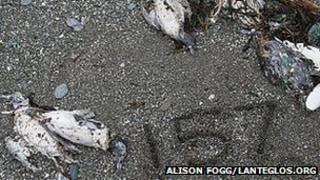 Dead birds on a beach at Lansallos