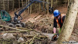 Trees being felled in Yorkshire woods