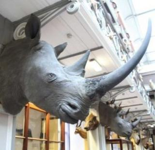 Photo issued by the National Museum of Ireland of the four stolen rhinoceros heads